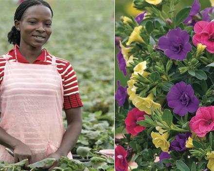 Challet Jeunes Plants® marque commerciale de Challet-Hérault