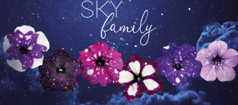 "<span class=""field-content"">SKY Family</span>"