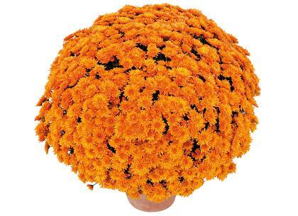 Chupa orange
