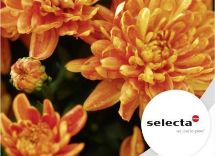 Chrysanthèmes et Vivaces 2021