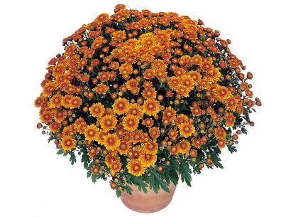 Sympa orange